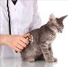 Ветеринарные клиники в Биробиджане